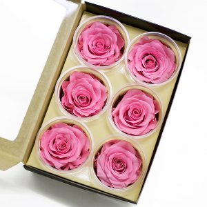 Pink Ecuadorian Eternity Flowers Preserved Roses Pack of 6 6cm to 7cm