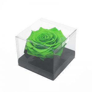 Jumbo Green Ecuadorian Eternity Flower Preserved Rose 9cm to 10cm