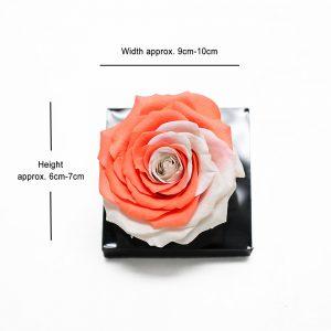 Jumbo Orange White Color Ecuadorian Eternity Flower Preserved Rose 9cm to 10cm