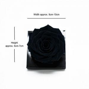 Jumbo Black Ecuadorian Eternity Flower Preserved Rose 9cm to 10cm