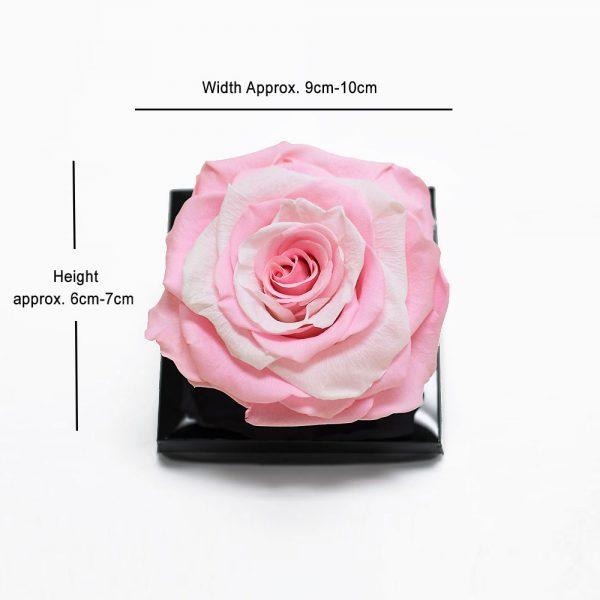 Large Pink Eternity Rose