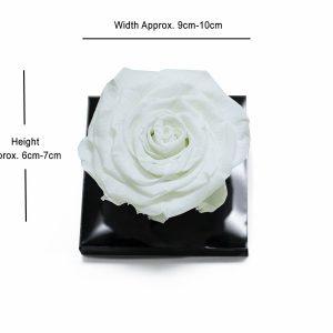 XL White Ecuadorian Eternity Flowers Preserved Roses 9cm to 10cm