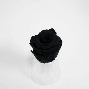 Black Ecuadorian Eternity Flowers Preserved Roses Pack of 6 6cm to 7cm