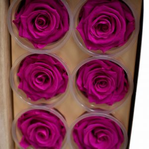Fuchsia Ecuadorian Eternity Flowers Preserved Roses Pack of 6 6cm to 7cm