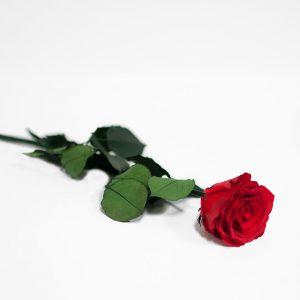 Red Long Stem Ecuadorian Eternity Flowers Preserved Rose