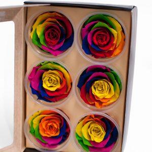 Rainbow Ecuadorian Eternity Flowers Preserved Roses Pack of 6 6cm to 7cm